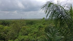 Horizonte en la selva del maya de riviera imagenes de archivo