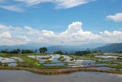 Horizonte lejano - terrazas hermosas del arroz, Asia Fotografía de archivo