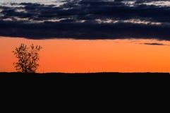 Horizonte silueteado árbol nublado anaranjado del horizonte de la puesta del sol imagen de archivo libre de regalías