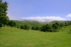 Horizonte verde do prado e céu azul Fotografia de Stock