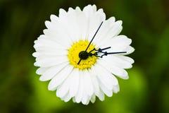 Horloge de fleur photographie stock libre de droits