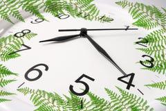 Horloge et fougères de mur Image stock