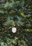 Horloge op naaldboomtak Stock Foto's