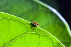 hormiga Imagen de archivo libre de regalías