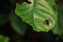 hormiga Imágenes de archivo libres de regalías