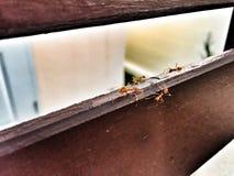 hormiga Fotografía de archivo
