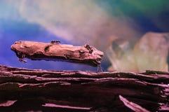 Hormiga al revés Foto de archivo libre de regalías