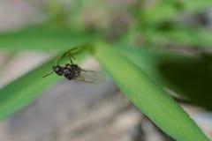Hormiga con imagen de la macro de las alas imágenes de archivo libres de regalías
