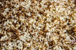 Hormiga con los huevos de la hormiga foto de archivo libre de regalías