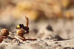 Hormiga de la mosca imagen de archivo