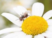 Hormiga del bosque Fotos de archivo libres de regalías