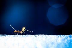 Hormiga del rojo del poder Fotografía de archivo