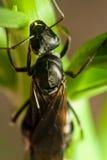 Hormiga del vuelo en la hoja Imagen de archivo libre de regalías