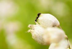 Hormiga en declive fotografía de archivo libre de regalías