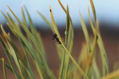 Hormiga en gras Fotografía de archivo libre de regalías