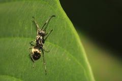 Hormiga en la hoja 2 fotografía de archivo