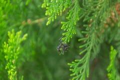 Hormiga en la rama Foto de archivo