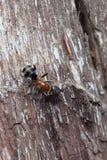 Hormiga en un árbol Imagen de archivo