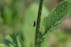 Hormiga en una hoja Foto de archivo