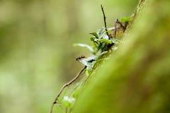 Hormiga en una hoja Imagen de archivo libre de regalías