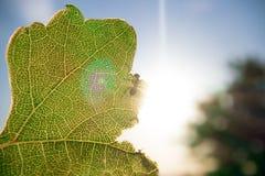 Hormiga en una hoja verde fotos de archivo