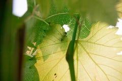 Hormiga en una hoja verde Foto de archivo libre de regalías