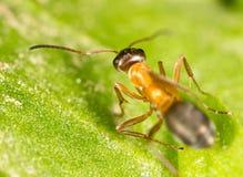 Hormiga en una hoja verde Macro Fotos de archivo
