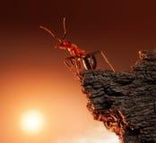 Hormiga encima de la roca, pico de montaña, concepto Fotos de archivo