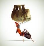 Hormiga que levanta un elefante/una hormiga que sostienen un elefante Fotografía de archivo libre de regalías
