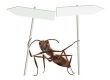 Hormiga que señala enfrente de direcciones Foto de archivo