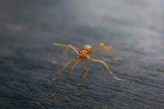 Hormiga que se coloca en piso de madera Fotos de archivo libres de regalías