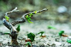 Hormiga que trabaja en la sombra de un pequeño árbol imagen de archivo libre de regalías