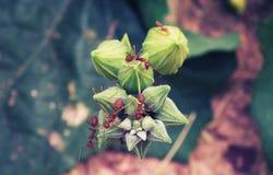 Hormiga roja con la flor Fotos de archivo libres de regalías