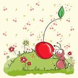 Hormiga rosada que come la cereza - todo agrupada para el ea Foto de archivo libre de regalías