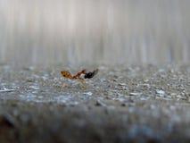 Hormiga trabajadora Foto de archivo