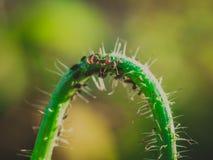 Hormiga y áfidos Fotos de archivo