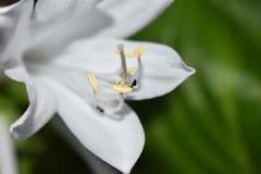 Hormiga y flor Imagen de archivo libre de regalías