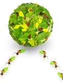Hormigas Imagen de archivo
