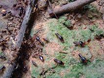 Hormigas Imagen de archivo libre de regalías