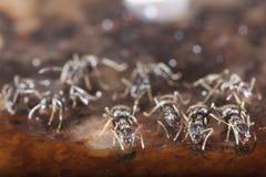 Hormigas Foto de archivo