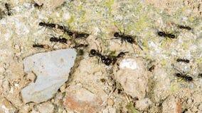 hormigas Foto de archivo libre de regalías
