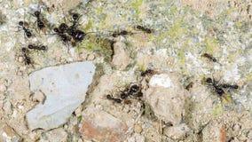hormigas Fotos de archivo