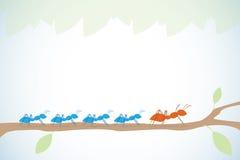 Hormigas azules de la ventaja de la hormiga de Brown en rama con las hojas, la dirección y el concepto del negocio Foto de archivo
