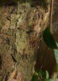 Hormigas de fuego y presa fotografía de archivo