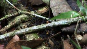 Hormigas de los insectos en la tierra en la selva tropical del Amazonas almacen de video