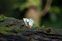 Hormigas de trabajo Fotos de archivo libres de regalías