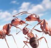 hormigas debajo del cielo pacífico Fotografía de archivo