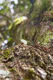 Hormigas del cortador de la hoja Fotos de archivo