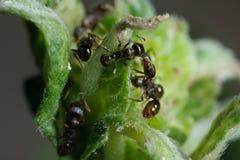 Hormigas del pavimento en el trabajo Imagen de archivo libre de regalías