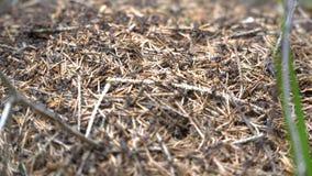 Hormigas del tiroteo, macro almacen de video